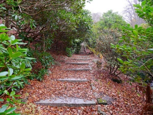 long path_z
